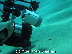 Nikki taking a shot of the frogfish - tiny black spot in ... by Anel Van Veelen 